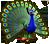 breedingmar2017_peacock_eventtimer_cloudrow.png