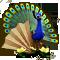 breedingmar2017_peacock_quest-workshop_big.png
